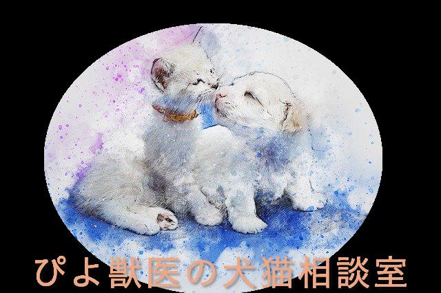ぴよ獣医の犬猫相談室